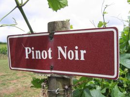 Pinot-Noir-Sign
