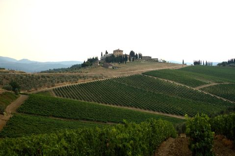vineyards_in_chianti_country